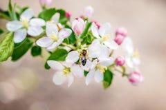 Abeja del jardín de flores Foto de archivo