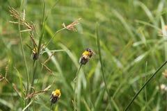 Abeja e hierba Foto de archivo libre de regalías
