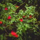 Abeja el dormir en arbusto verde Foto de archivo