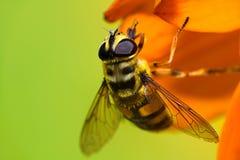 Abeja en campo de flor Imagen de archivo libre de regalías