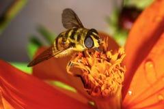 Abeja en campo de flor Imagenes de archivo
