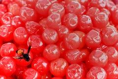 abeja en cereza roja Foto de archivo