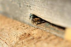 Abeja en colmena de madera foto de archivo