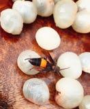 Abeja, en el deber de los nature's para traer la miel Imágenes de archivo libres de regalías
