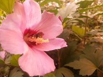 Abeja en flor Fotografía de archivo