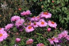 Abeja en la flor Fotos de archivo libres de regalías