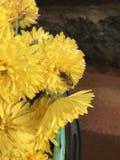 Abeja en la flor amarilla Fotografía de archivo libre de regalías