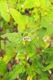 Abeja en la flor con el fondo verde del tono Fotografía de archivo