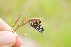 Abeja en la flor de la hierba Imagen de archivo libre de regalías