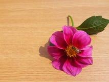 Abeja en la flor en fondo de madera Imagenes de archivo