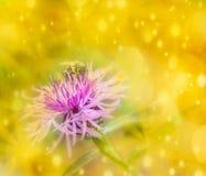 Abeja en la flor púrpura en el oro Imagenes de archivo
