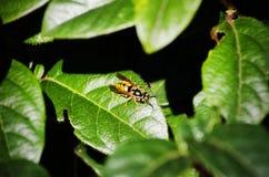 Abeja en la hoja verde Foto de archivo libre de regalías