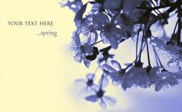 Abeja en las flores del resorte Fotos de archivo libres de regalías