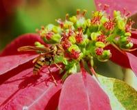 Abeja en las flores rojas y amarillas imagenes de archivo