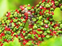 Abeja en las frutas y las flores Fotografía de archivo libre de regalías