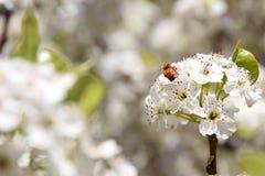 Abeja en los flores Fotos de archivo