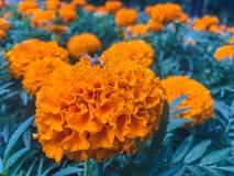 Abeja en maravilla anaranjada en el Park City Fotografía de archivo