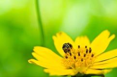 Abeja en naturaleza verde Fotos de archivo