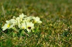 Abeja en primavera Imagen de archivo