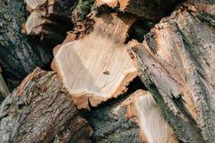 Abeja en un árbol del corte Imagen de archivo