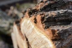 Abeja en un árbol del corte Foto de archivo libre de regalías