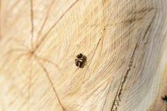 Abeja en un árbol del corte Imágenes de archivo libres de regalías