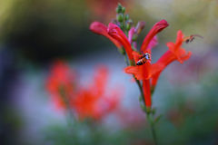 Abeja en un 'кÐ? del ² Ð?Ñ del † Ð de а Ñ del ½ del ‡ Ð?Д а Ð del ¿Ñ de la flor Ð Fotos de archivo libres de regalías