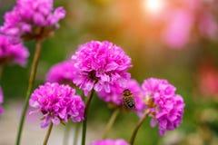 Abeja en un arco de la flor Foto de archivo libre de regalías