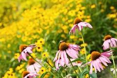 Abeja en un campo de flores Fotos de archivo