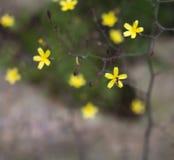 Abeja en un crecimiento de flor amarillo salvaje en un prado Imágenes de archivo libres de regalías