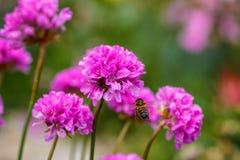 Abeja en un verano del arco de la flor en el jardín Foto de archivo libre de regalías