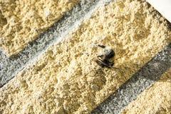 Abeja en un web de araña Fotografía de archivo