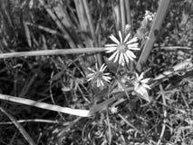 Abeja en un wildflower Foto de archivo
