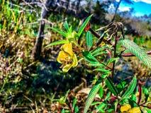 Abeja en un wildflower Fotografía de archivo libre de regalías