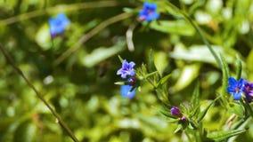 Abeja en una flor almacen de video