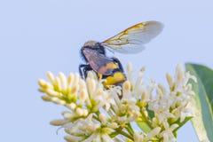 Abeja en una flor Fotografía de archivo libre de regalías