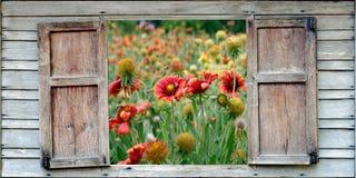 Abeja en una flor de la margarita Fotografía de archivo libre de regalías