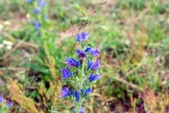 Abeja en una flor hermosa del prado Fotos de archivo libres de regalías