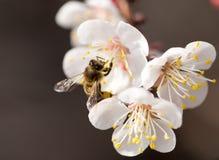 Abeja en una flor en la naturaleza Macro Foto de archivo