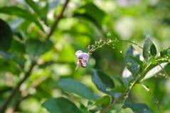 Abeja en una flor púrpura Foto de archivo libre de regalías