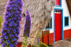 Abeja en una flor violeta de Madeira Fotografía de archivo