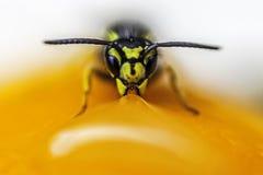 Abeja en una fruta Imagenes de archivo