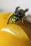 Abeja en una fruta Fotografía de archivo