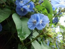 Abeja-flor combinada fotos de archivo libres de regalías