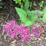 Abeja floral Fotografía de archivo libre de regalías