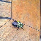 abeja grande en una tabla de madera en foco Imagenes de archivo