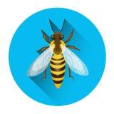 Abeja Honey Insect Apiary Icon Imagen de archivo libre de regalías