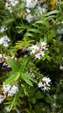 Abeja industriosa en una flor Fotografía de archivo libre de regalías