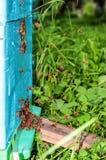 Abeja, insectos, colmena Fotografía de archivo