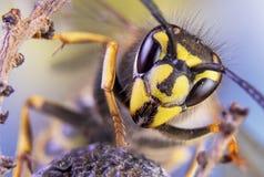 Abeja, intercambio, miel, avispa de los insectos de la flor del fondo Imágenes de archivo libres de regalías